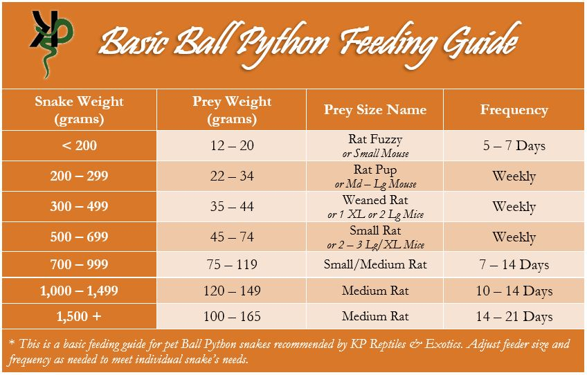 Ball python feeding guide with prey size recommendations based on the snake's weight. Less than 200 grams, feed a rat fuzzy or small mouse. Between 200 and 299 grams, a rat pup or medium to large mouse. 300 to 499 grams, a weaned rat or XL mouse. 500 to 699 grams, a small rat or 2 to 3 large/XL mice every week. 700 to 999 grams, a small-medium rat every 7 to 14 days. 1000 to 1499 grams a medium rat every 10-14 days. 1500 grams or more a medium rat every 14 to 21 days.